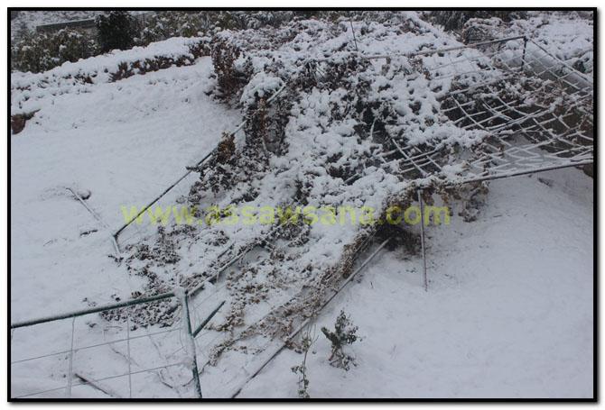 اجمل الصور في موسم الشتاء 4fd13d2abd71cb02e407