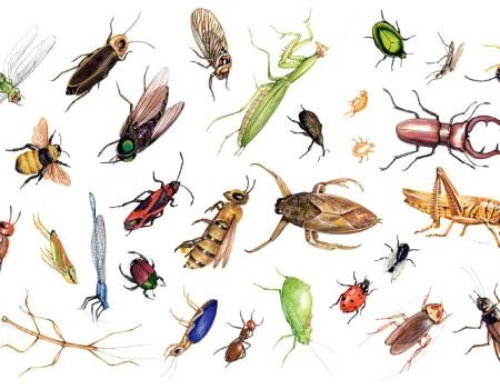 كيفية القضاء على حشرات المنزل بعدة طرق ءامنه
