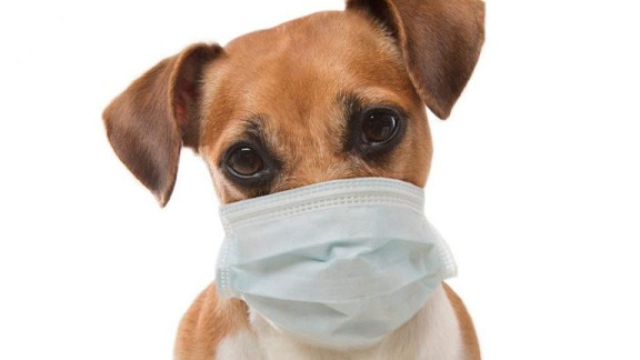الاردن يسجل حادثة غريبة .. اصابة كلب بفيروس كورونا