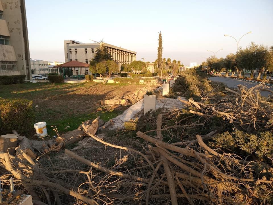 اليرموك مستمرة بتقطيع الأشجار متجاهلة آثاره على البيئة