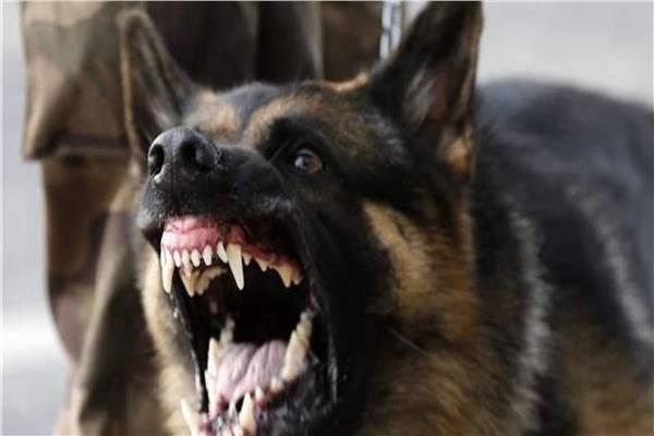 كلب هجين ينهش زوج وزوجته وابنته في اربد